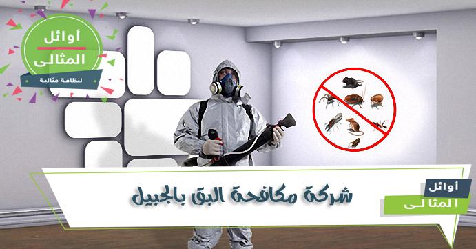 شركة مكافحة البق بالجبيل 0500806539 التخلص من البق بطريقه امانه وافضل الاسعار