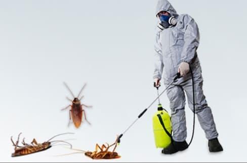 شركة مكافحة حشرات بالجبيل 0506051316 مكافحة الصراصير و الفئران و القوارض بالجبيل