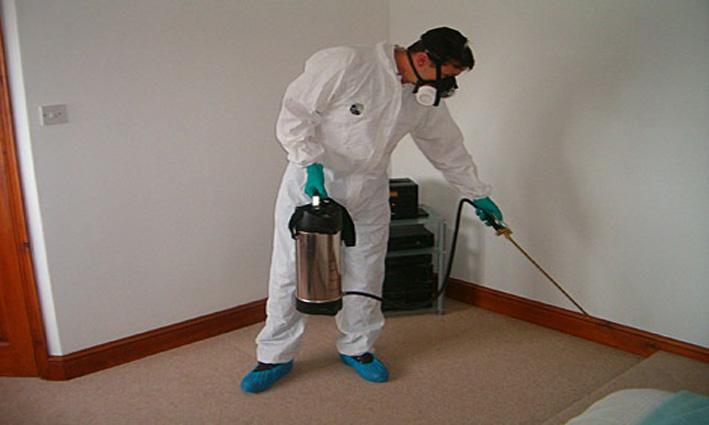شركة مكافحة حشرات بالقصيم 0500806539 مكافحة الصراصير و بق الفراش بالقصيم